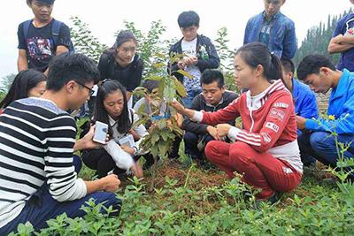 西秀区高级职业技术中学-植树节